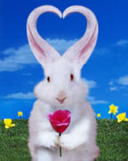 funny silly animal picture of a cute bunny rabbbit